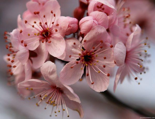 3.bahar.gelme.ustume