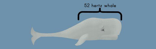 52-hertz-resim