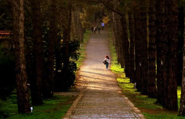 arboretum gezinti