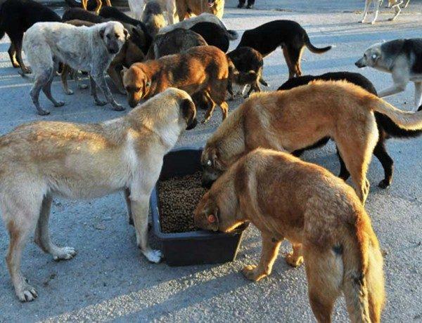 hayvan-beslemek-kamu-zarari-ajanimo-3-1-600x460