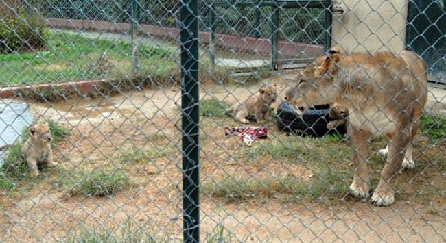 hayvanat bahçesi 2