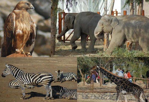 hayvanat bahçesi 8