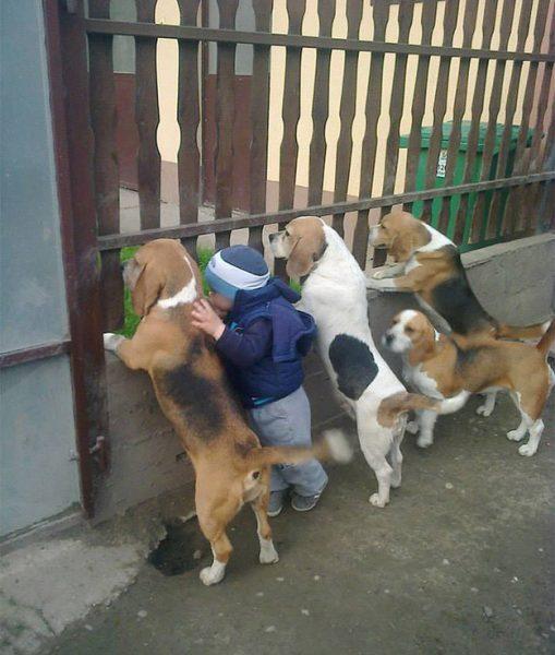 köpek-cocuk-yavru