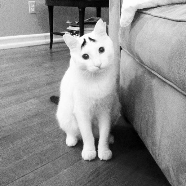 kasli-kedi