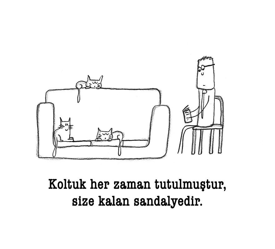 kedi 10