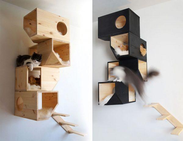 kedi-evi