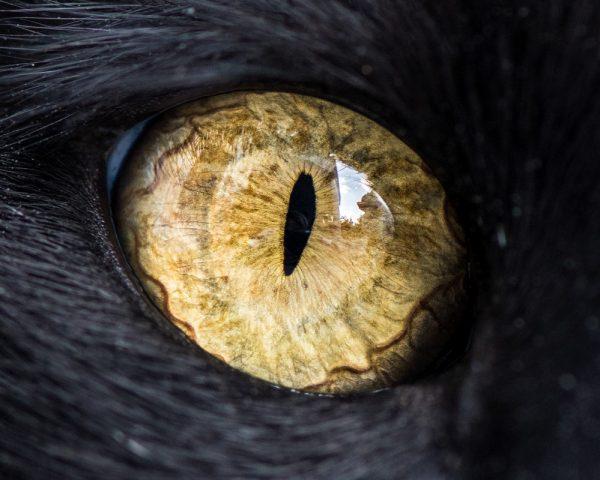 kedi-goz1