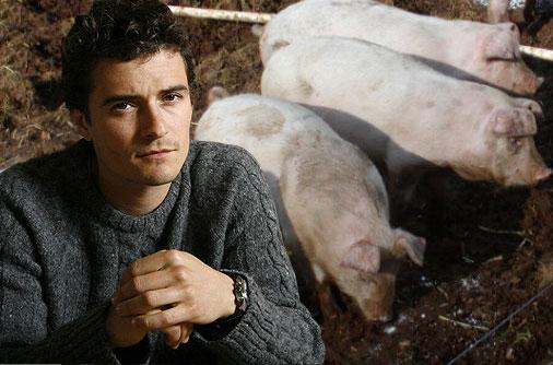 orlando-domuz