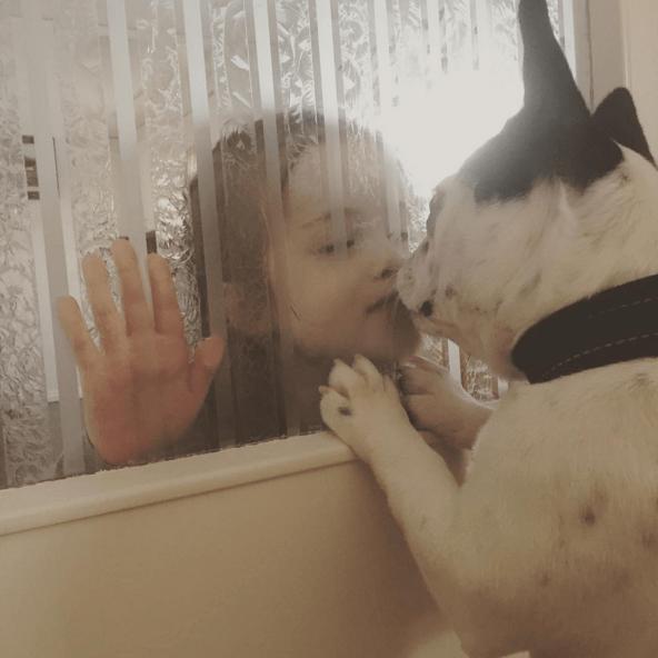 sevgi-kopek-kedi