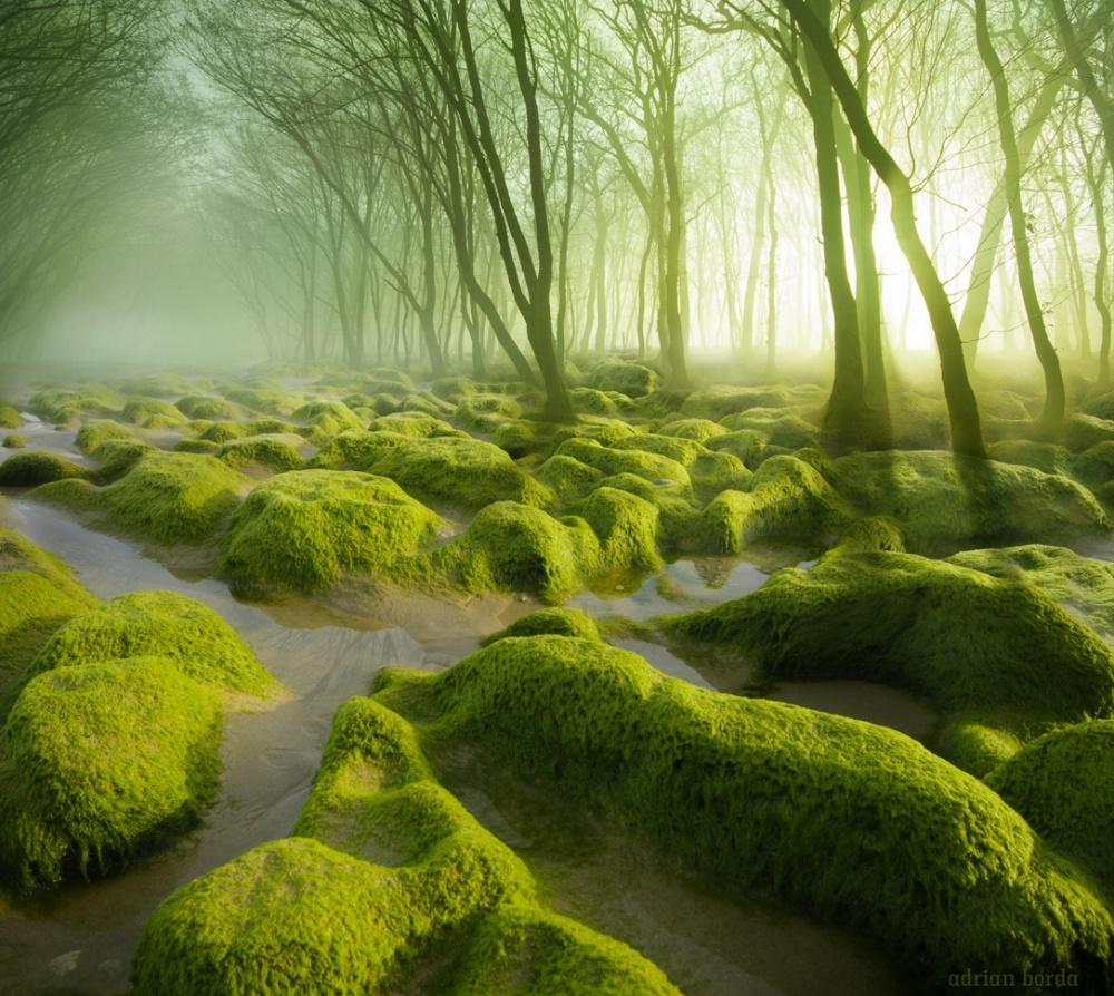 yosun bataklik
