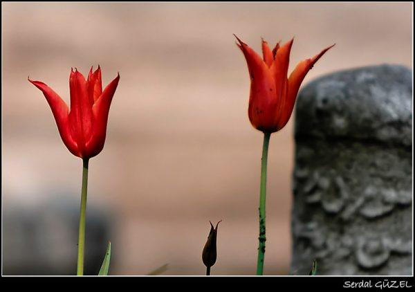 14.Ölüm Üzerine