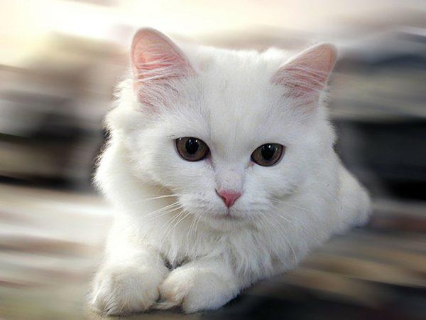 3.kedi.miriltisi.listelist