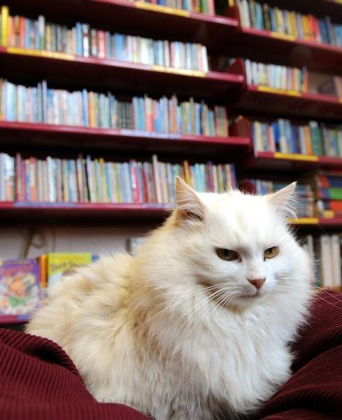beyaz-kedi-kitap