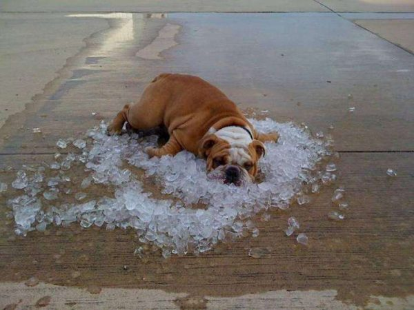 dogs-are-hotter-than-humans-photo-u1