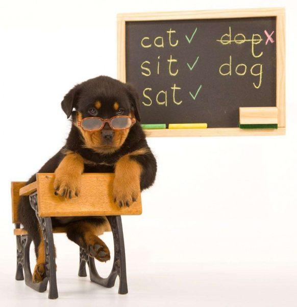 dogs-can-learn-impressive-vocabularies-photo-u1