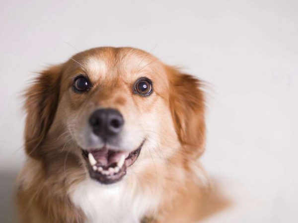 dogs-can-read-your-face-photo-u1