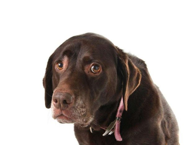 dogs-can-suffer-from-depression-photo-u1