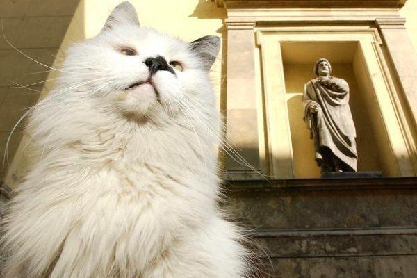 ermitaj-kedi2