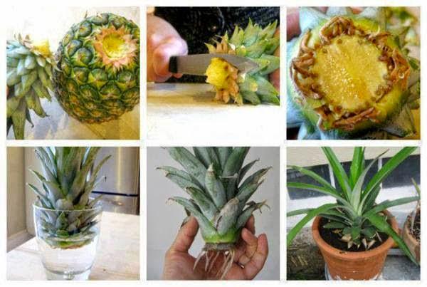 evde ananas
