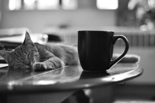 kahve-kedi