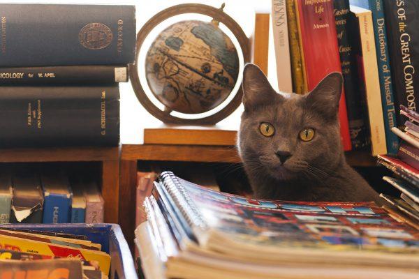kedi-bakis-kitap