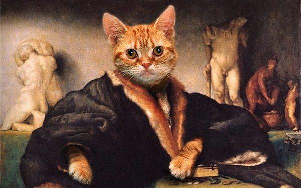 kedi-portre