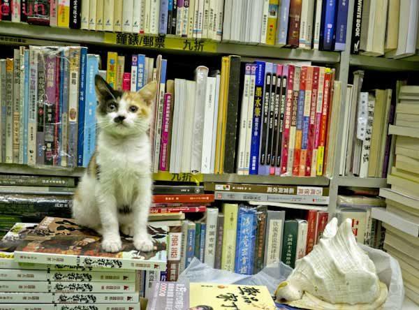 kitap-yavru-kedi