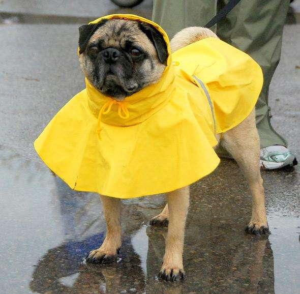 the-sound-of-rain-hurts-dogs-ears-photo-u1