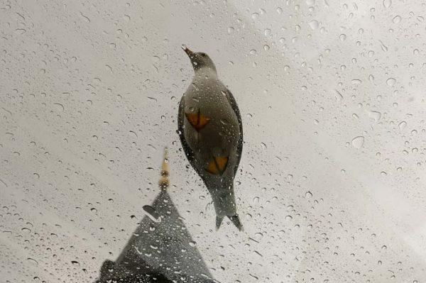 1. Yağmurda Unutulan Şarkı