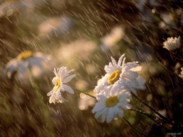 10. Yağmur Yağmur