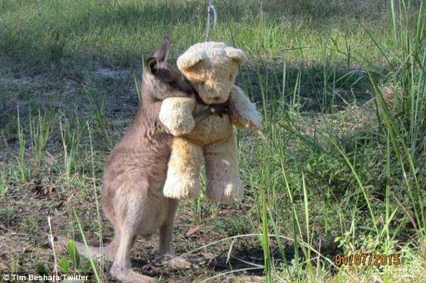 2.kanguru.doodleug.listelis