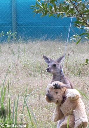 3.kanguru.doodleug.listelis