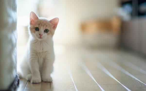 3.kedilerle.ilgili.yanlis.bilinenler.petle