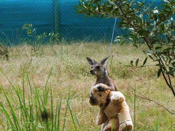 4.kanguru.doodleug.listelis