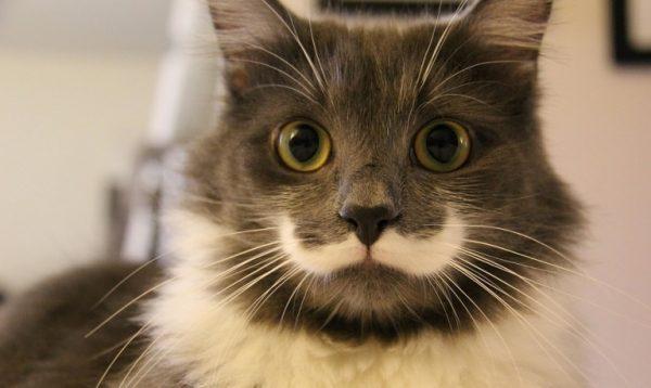 5.kedilerle.ilgili.yanlis.bilinenler.petle