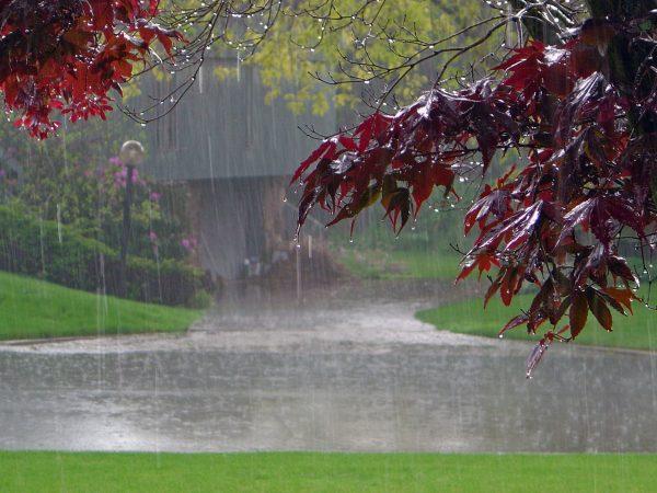 8. Bu Yağmur