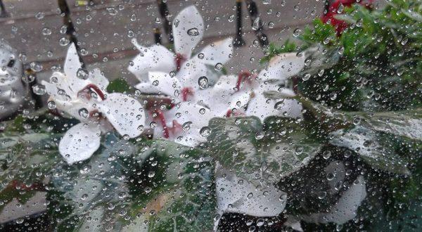 9. Yağmur Taneleri