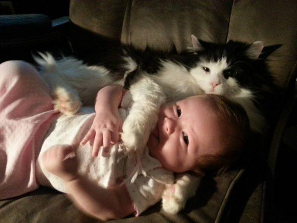 9.kedilerle.ilgili.yanlis.bilinenler.petle