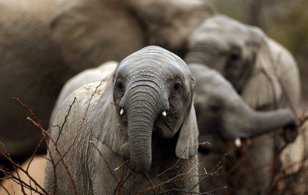 bebek-fil