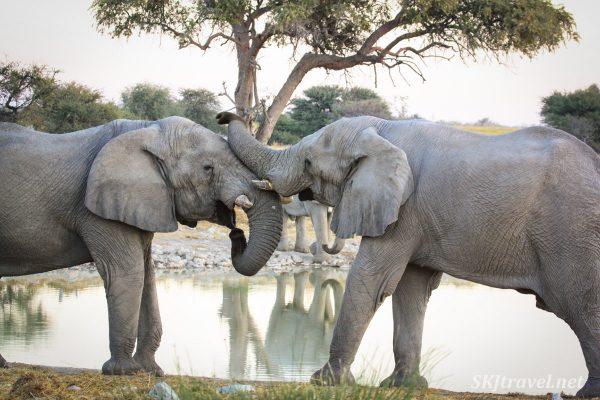 dişsiz filler