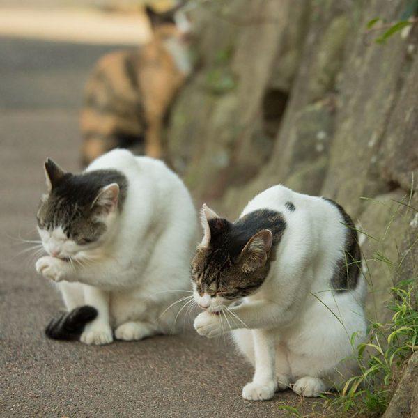 10.tokyo.sokak.kedileri