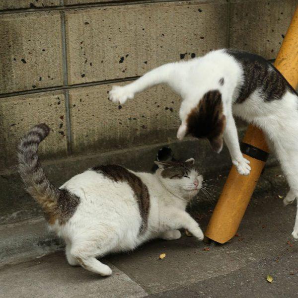 11.tokyo.sokak.kedileri