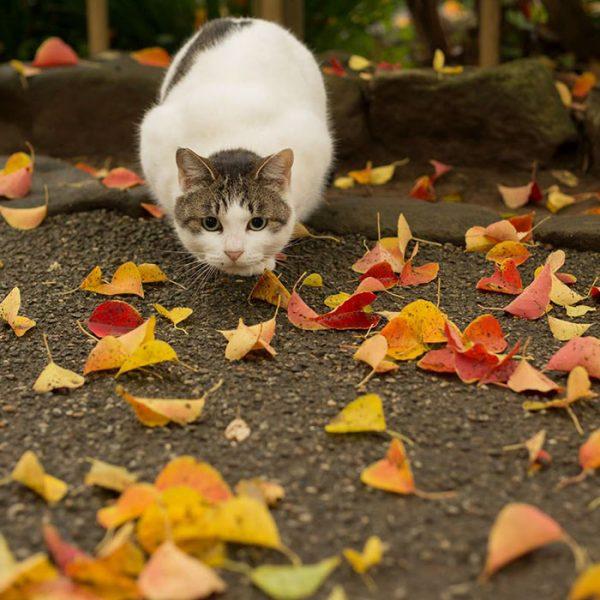 14.tokyo.sokak.kedileri