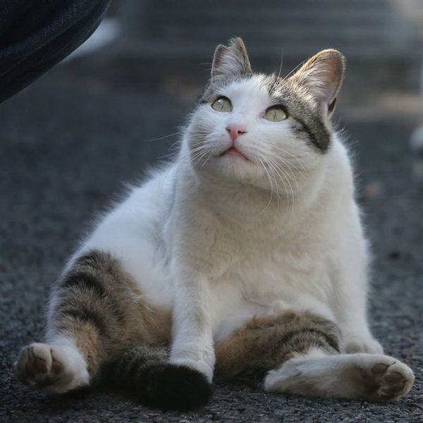 17.tokyo.sokak.kedileri