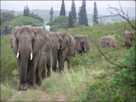 3.vefali.filler.listelist