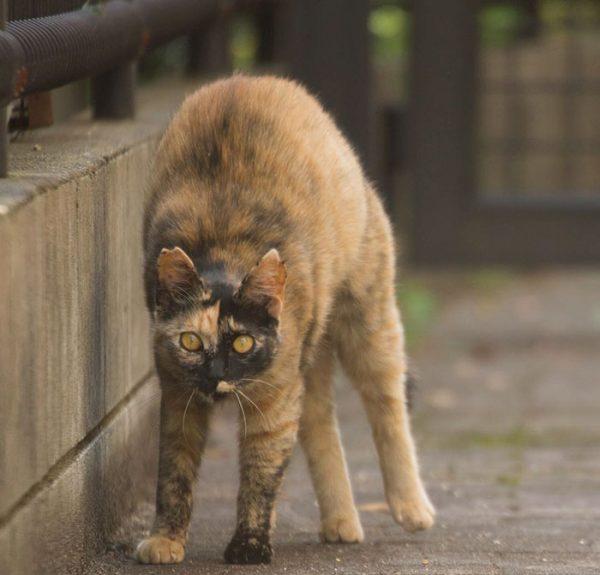 5.tokyo.sokak.kedileri