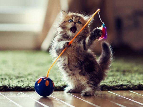 7.asi.kedinizi.minnos