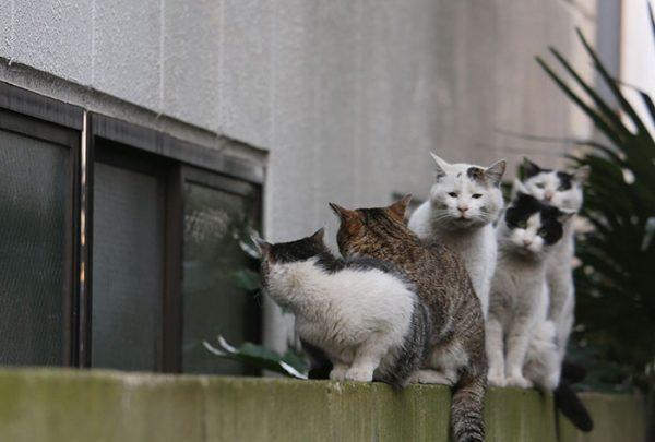 7.tokyo.sokak.kedileri