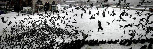 Kışın güvercinler