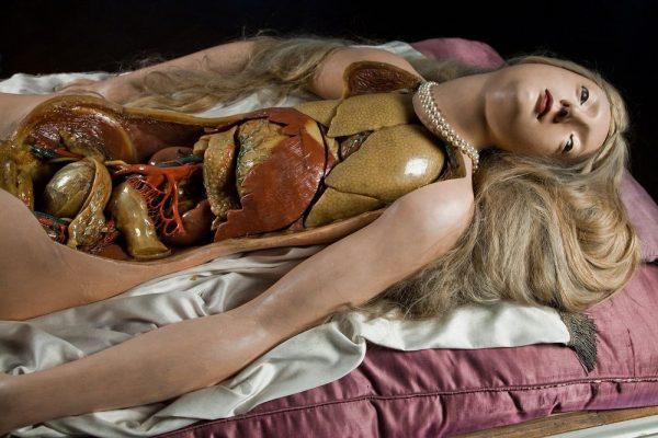 anatomik-venus-1